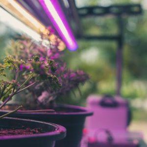 Barre Flora LED SLIM